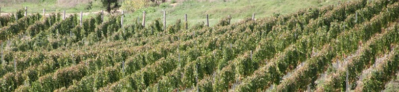 Colacino Wines s.r.l.